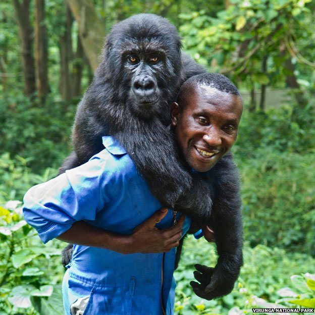 Gorilla Keeper Bauma, Virunga National Park